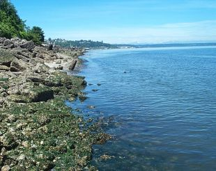 View of Puget Sound from Pierce County shore
