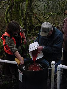 Collecting Salmon Eggs